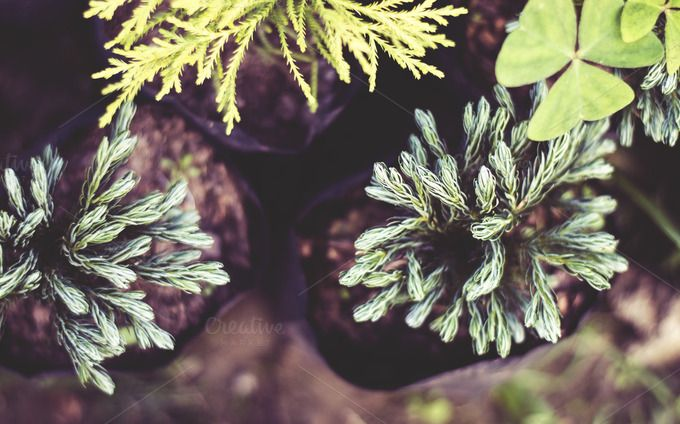 Check out Some Thorny Garden Plants by Shots By RC on Creative Market