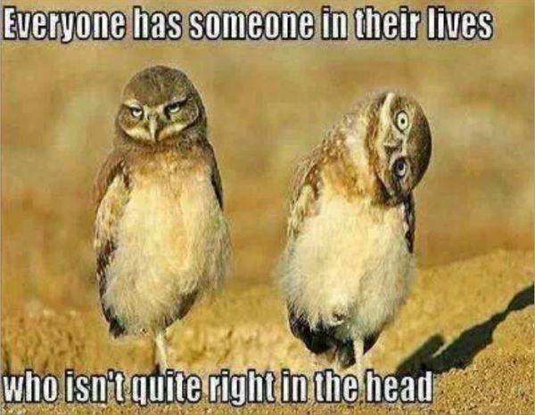 Funny owl meme - http://www.jokideo.com/funny-owl-meme/