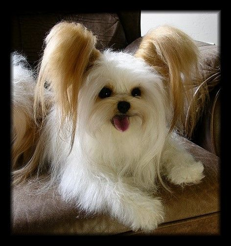 Make My Dog Into A Stuffed Animal Uk