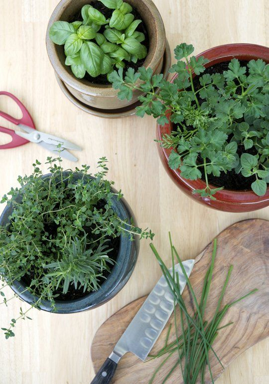 1000 ideas about kitchen herb gardens on pinterest for Small kitchen garden
