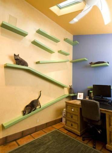 O norte-americano Peter Cohen, apaixonados por gatos, passou os últimos 20 anos de sua vida reformando a sua casa, na Califórnia.