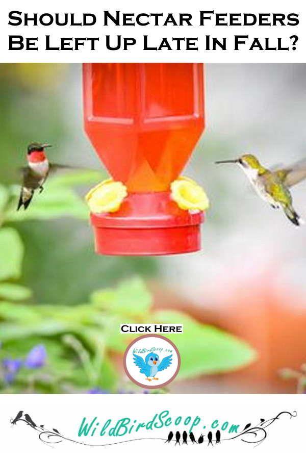When Do I Take Down My Hummingbird Feeder For The Winter Humming Bird Feeders Bird Feeding Station Nectar Feeders