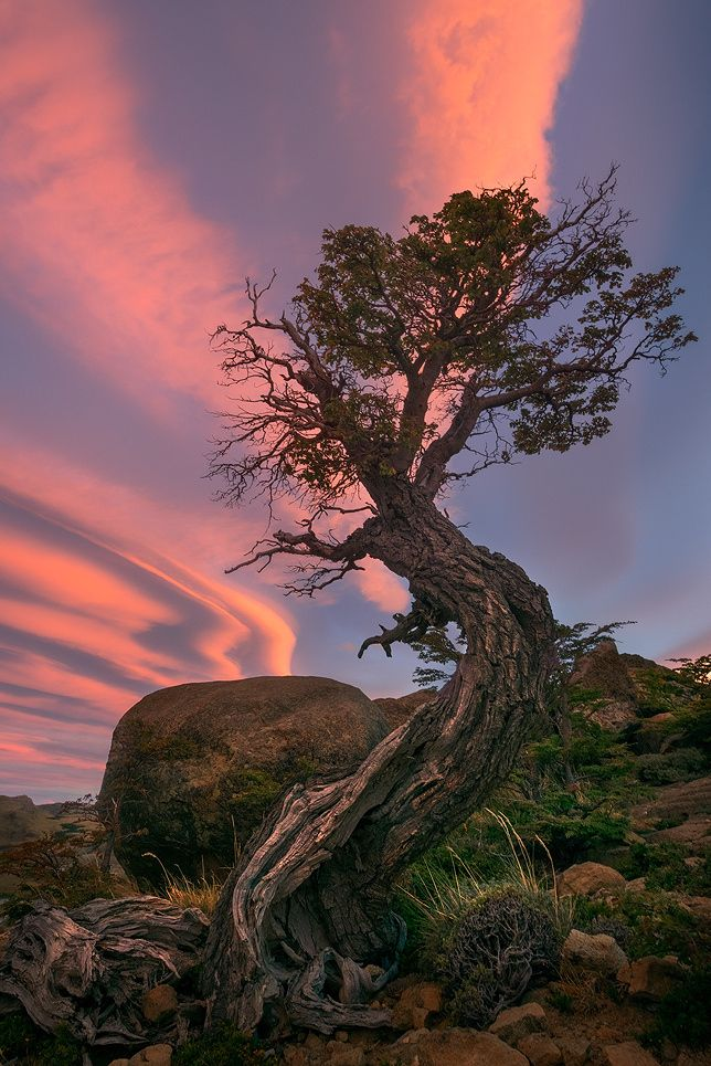~~The Sentinal | lone tree and lenticular clouds | by Exploring Light~~