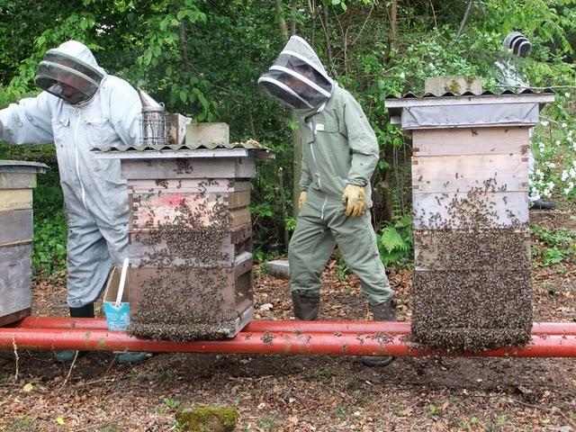 29 best Honeyu0027Bu0027keeping images on Pinterest Beekeeping, Bees and - fresh apiary blueprint examples