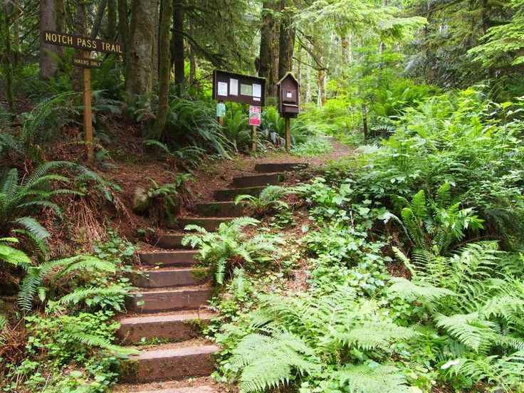 History Hikes in Washington - 8 trails that tell a Native American story