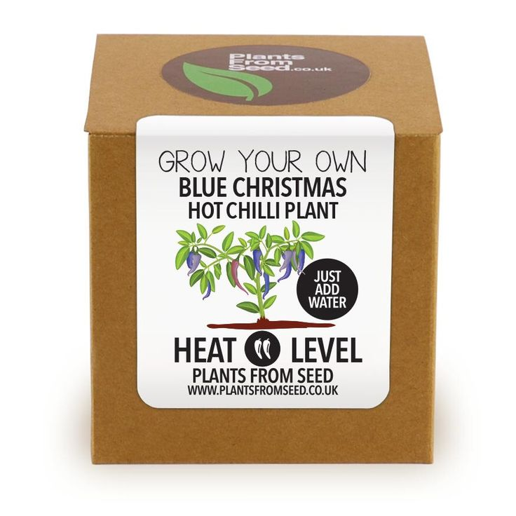 Grow Your Own Blue Christmas Chilli Plant Kit by PlantsFromSeed on Etsy https://www.etsy.com/uk/listing/248180322/grow-your-own-blue-christmas-chilli