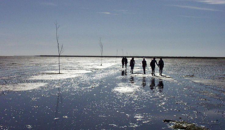 Wadden Sea safari - South West Denmark