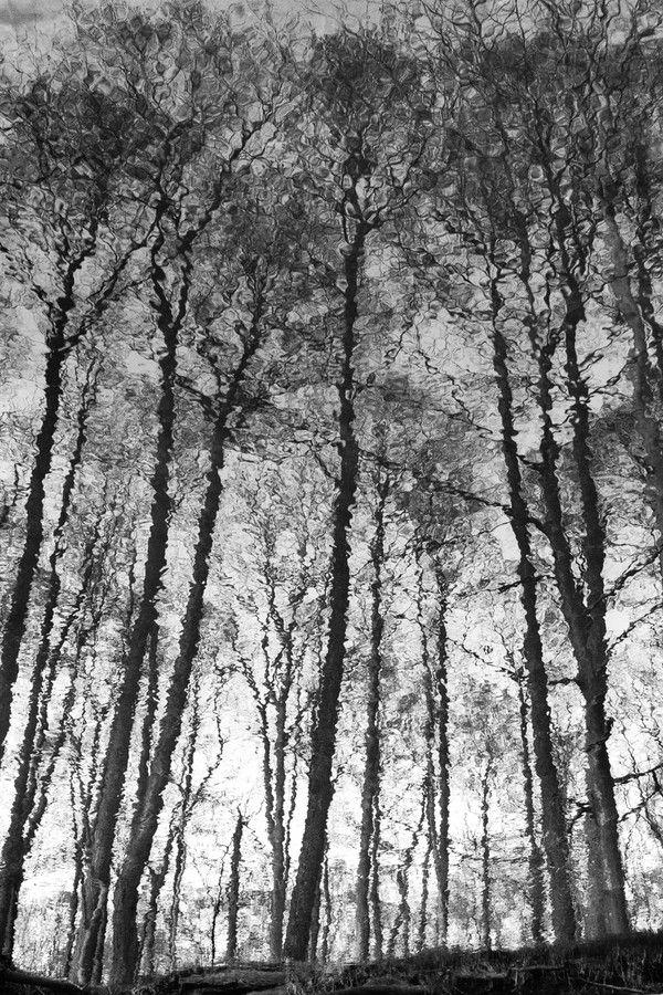 Trees by Karen-Louise Clemmesen on 500px