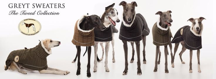 Tweed Coat for Greyhounds, Whippets, Lurchers, Salukis | eBay