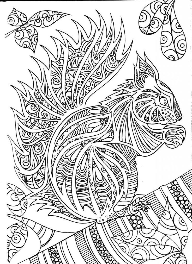 Squirrel Adult Coloring Book Sample Pages
