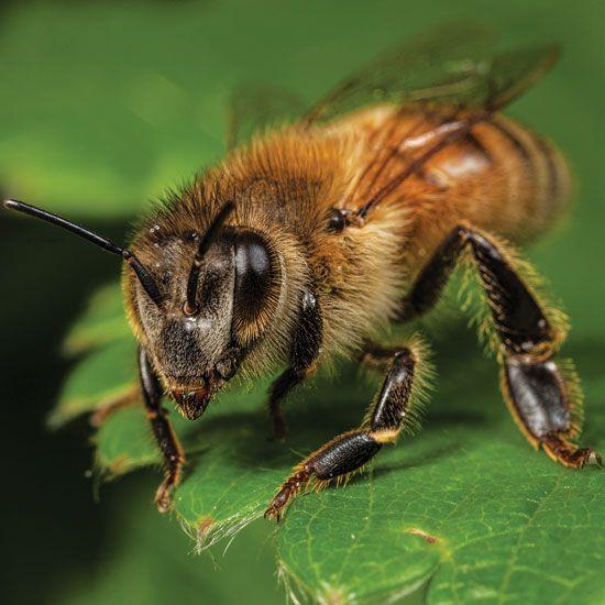 Best Beekeeping For Beginners Ideas On Pinterest Bee Keeping - Backyard beekeeping for beginners