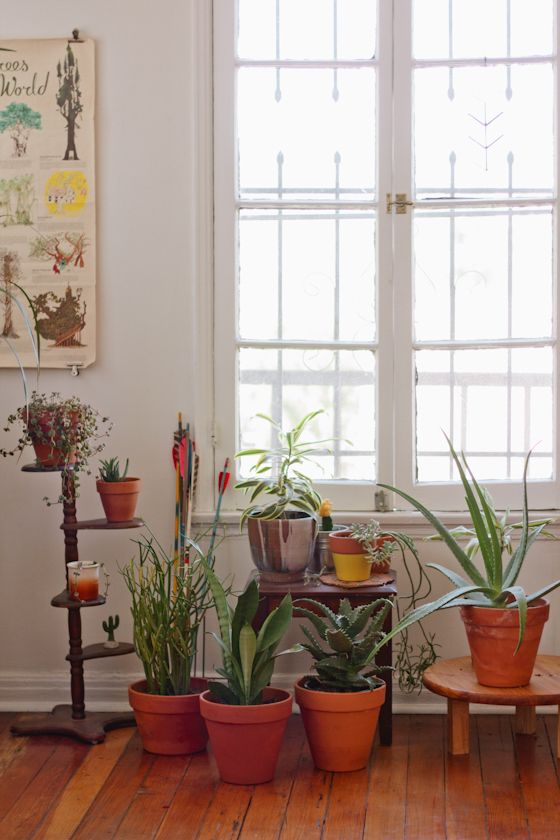 indoor plants done right / kate miss.