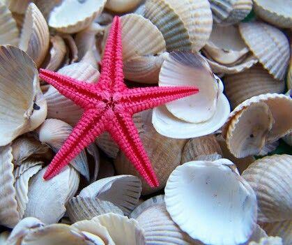 Küçük deniz yıldızı...