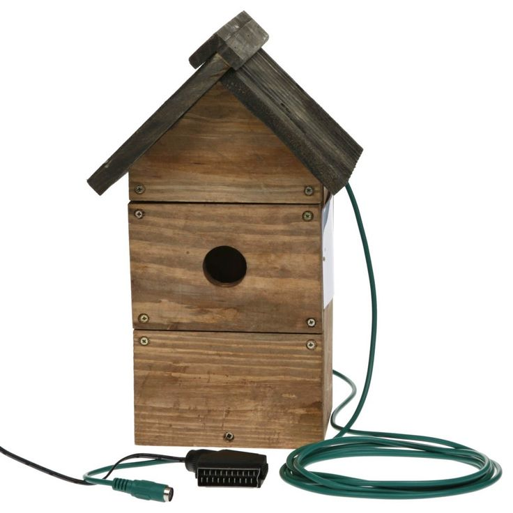 bird nesting boxes with camera  sc 1 st  Pinterest : cameras for bird boxes - Aboutintivar.Com