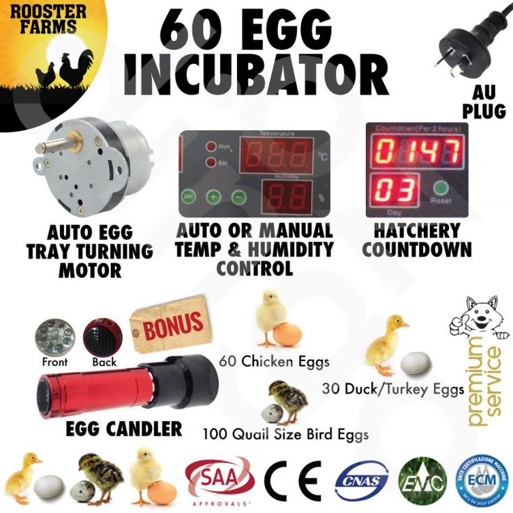 10 Best Chicken Egg Brooder Temperature Images On