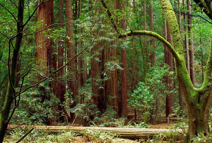 Mejores 11 imágenes de Piérdete por la California más salvaje: una ...