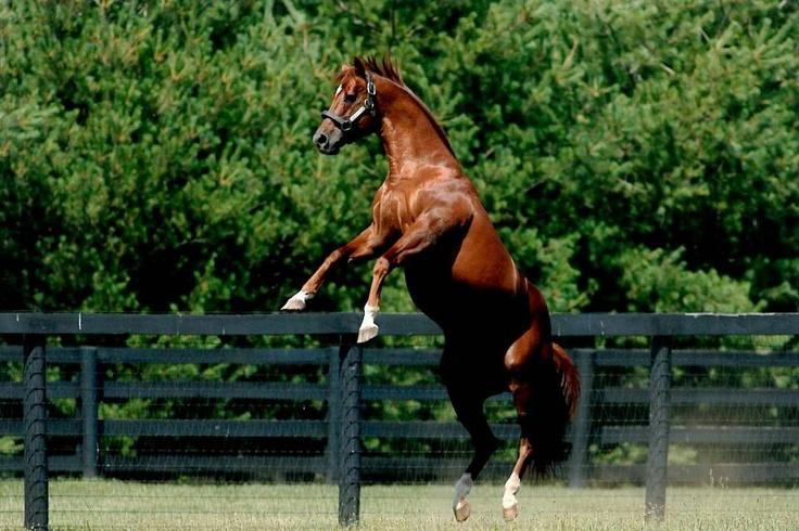 Win Star Farm stallion Distorted Humor Sensational