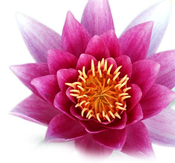 Lotus Flower Buddha 17 Best ideas about Lo...
