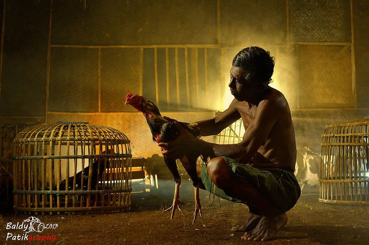 Sang Petarung ii [The Fighter] by Baldy Patikraja