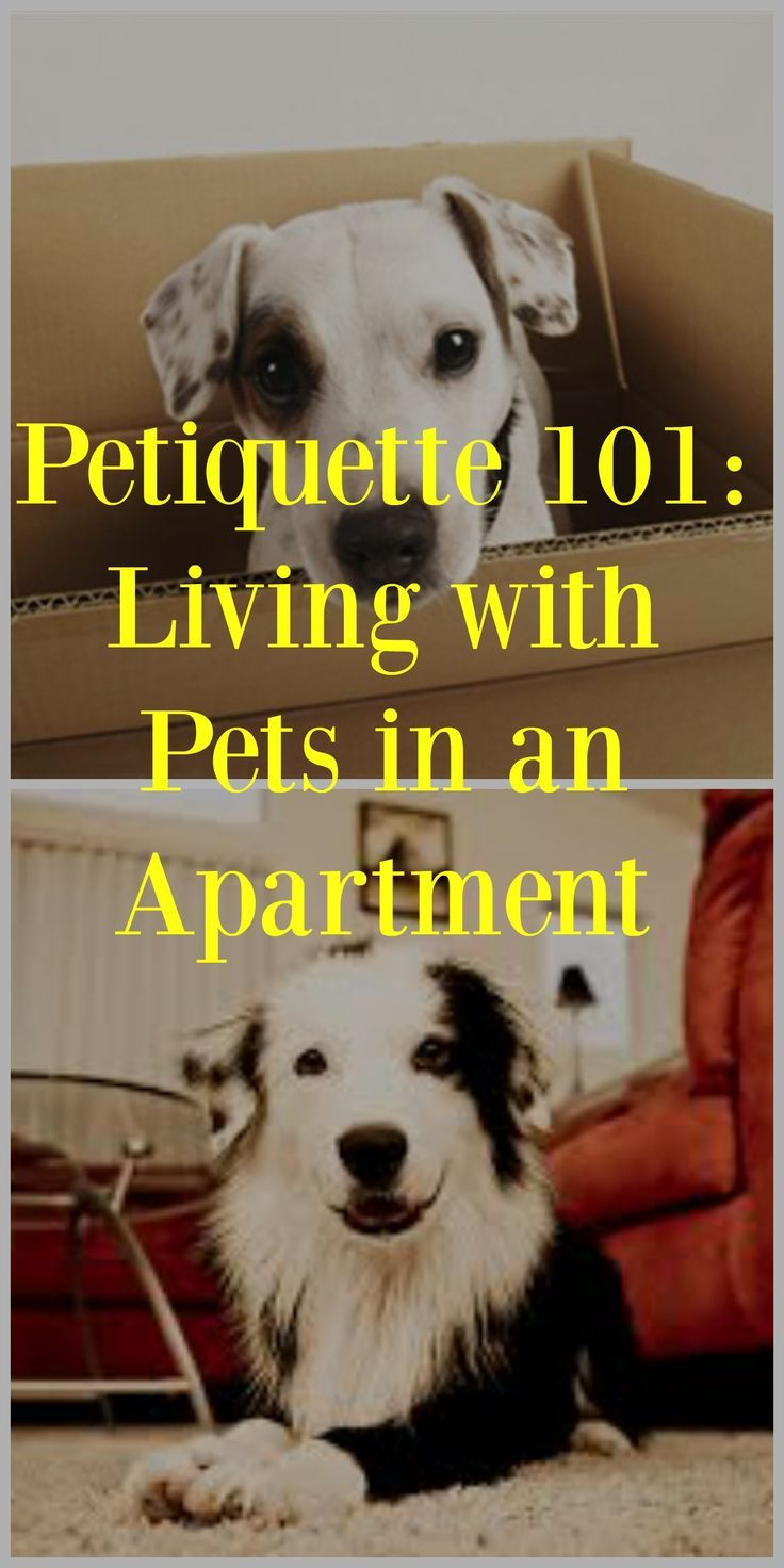 So, what do you do if you have a loud dog next door that keeps you awake from barking? What do you do if you are constantly dodging pet waste as you walk through the grounds? There are appropriate and inappropriate ways to handle these situations as the p