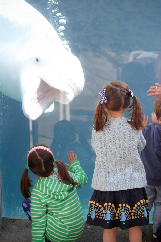 Mystic Aquarium: A great place for families with young children. Easy to navigate, fun and educational. Planning tips and aquarium highlights. #mysticaquarium #mysticCT #familytravel #bestaquariumsforkids