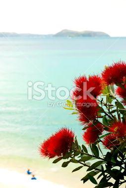 New Zealand Pohutukawa & Seascape Royalty Free Stock Photo