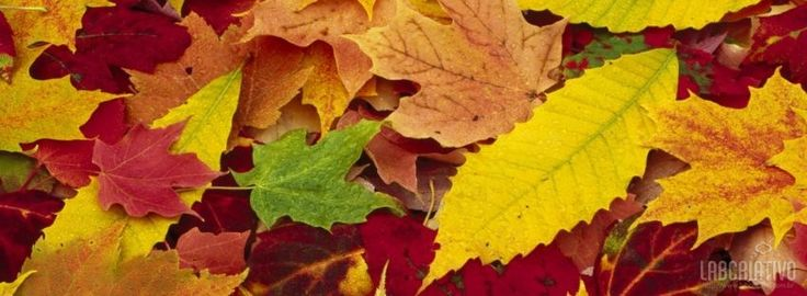 facebook timeline cover Autumn Leaves Changing Color Seasons/Autumn,Autumn,Fall,Leaves,Color,autumn leaves,Changing