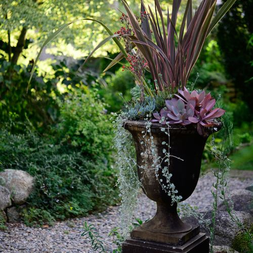 How to make lush and low-water containers | Grow Beautifully