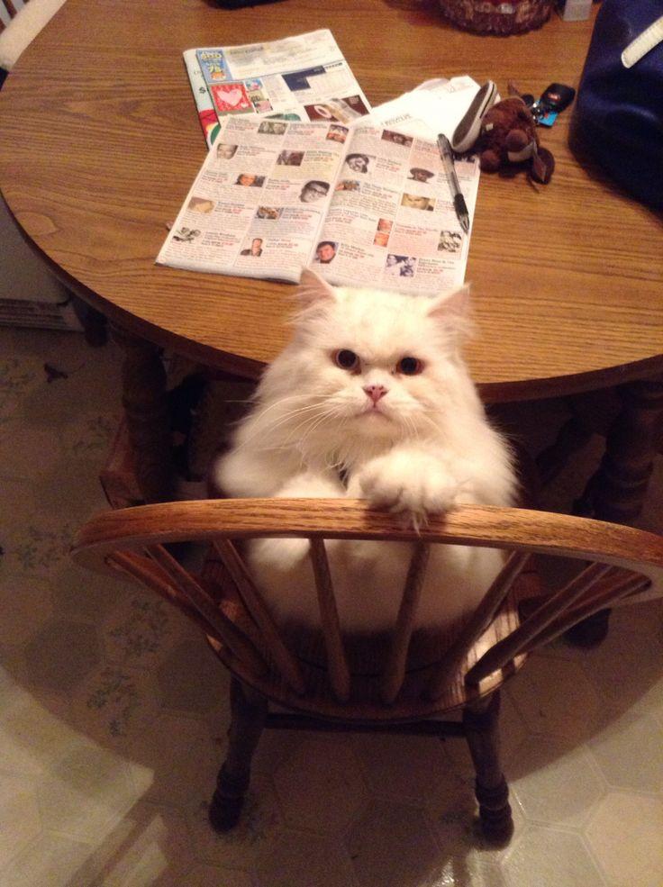 Frosty my big kitty cat !!