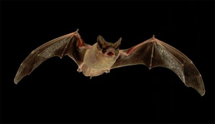 #Vecino atrapó a un murciélago con rabia en Córdoba - El Diario de Carlos Paz: El Diario de Carlos Paz Vecino atrapó a un murciélago con…