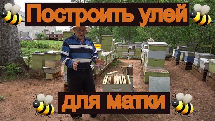 пчеловодство - Что делать, если ваш пчелиный улей становится большим и р...