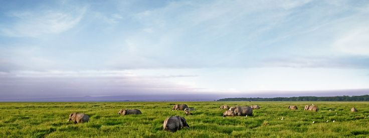 Places   Conserving Priority Places   World Wildlife Fund