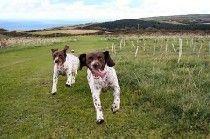 Warcombe Farm, Woolacombe, Devon, Campsite Devon. Pet Friendly. Accepts Dogs & Small Pets.
