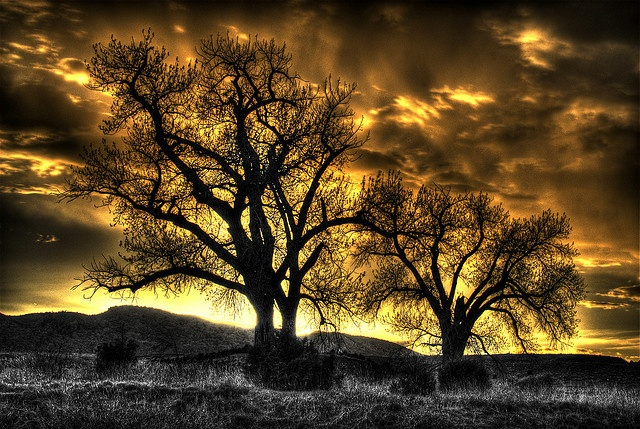 Trees at Sunset, Colorado