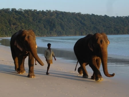 Havelock Island (part of the Adaman Islands) is in the middle of the Bay of Bengal off of India's east coast.