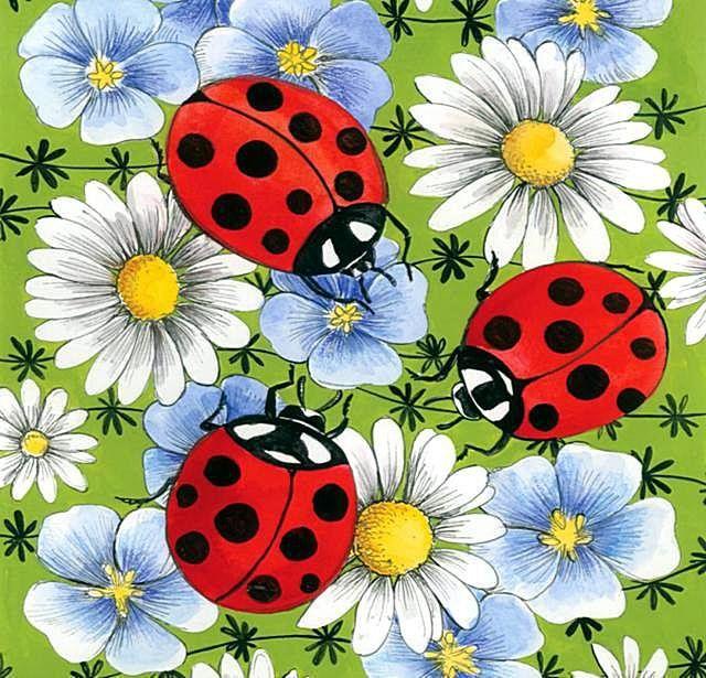 Картинки рисованные цветы и насекомые