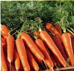 Перемешать семена моркови с высушенным испитым кофе. Эффект такой — реже сеются семена (меньше прореживать), и удобряются. Запах кофе отпугивает паразитов! Урожай всегда отличный и хранится всю зиму...