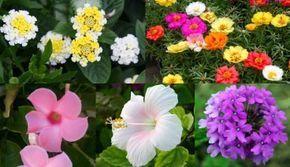 10 magnifici fiori da coltivare in pieno sole