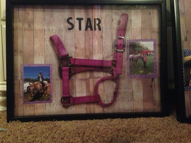 Horse halter shadow box