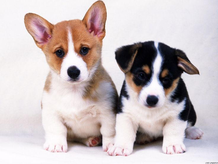 ... 3D, Nature Wallpapers: Fantastic and lovely pictures of cute puppies