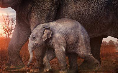 Scarica sfondi Cucciolo di elefante, tramonto, piccolo elefante, Africa, gli elefanti