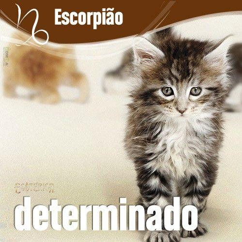 """""""#Escorpião #signos #zodíaco ♏"""""""
