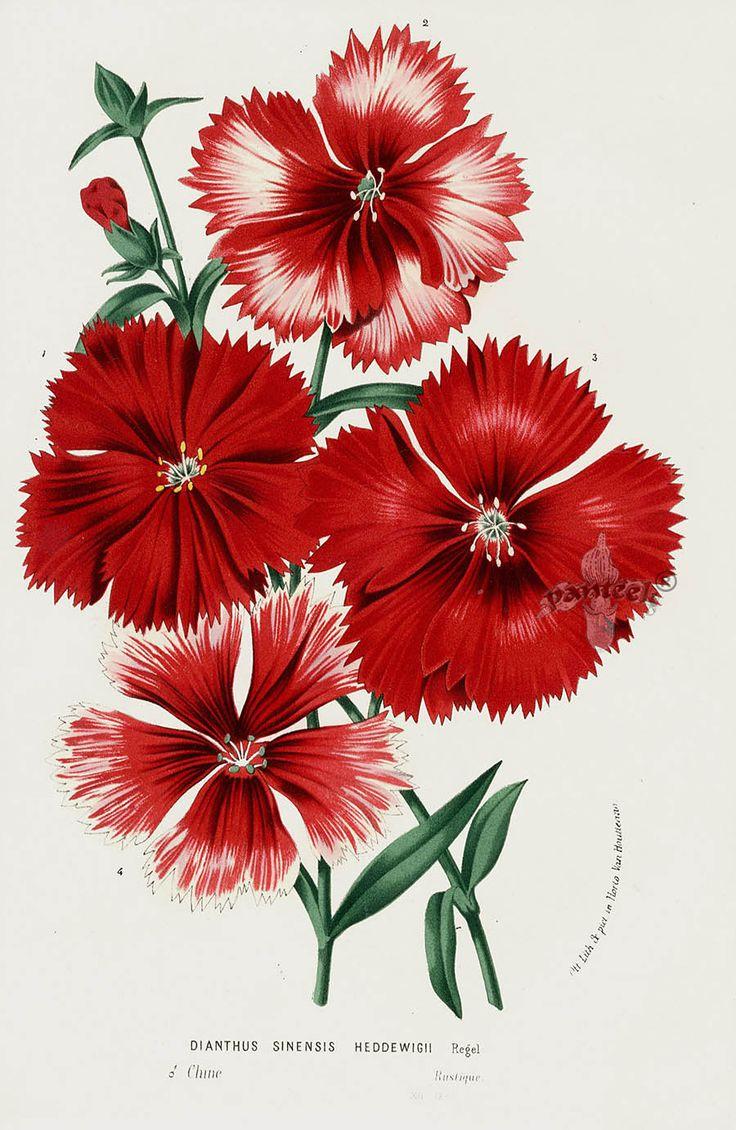 1685 best çini images on Pinterest   Ceramic plates, Coloring book ...