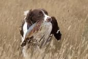 South Dakota pheasant hunting packages with unlimited birds up to the state limit. When the South Dakota pheasant season is over join us for NE waterfowl hunting.  Cheyenne Ridge Lodge SD