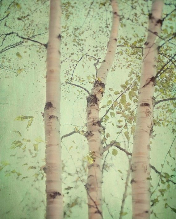 Forest for the trees - Fine art photograph - A birch forest $30.00USD  love this ... for the color palette + the birch trees. reminds me of our yard in New England (it had wetlands filled with birch trees)Pastel, Trees Art, Color Palettes, Mint Green, Birches Trees, Nature, New England, Colors Palettes, Spring