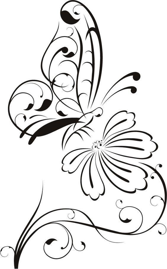 Butterfly Feeds on Flower Nectar