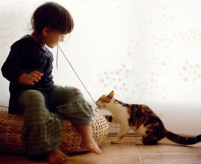 Copiii crescuti alaturi de pisici se dezvolta mai armonios si sunt mai responsabili