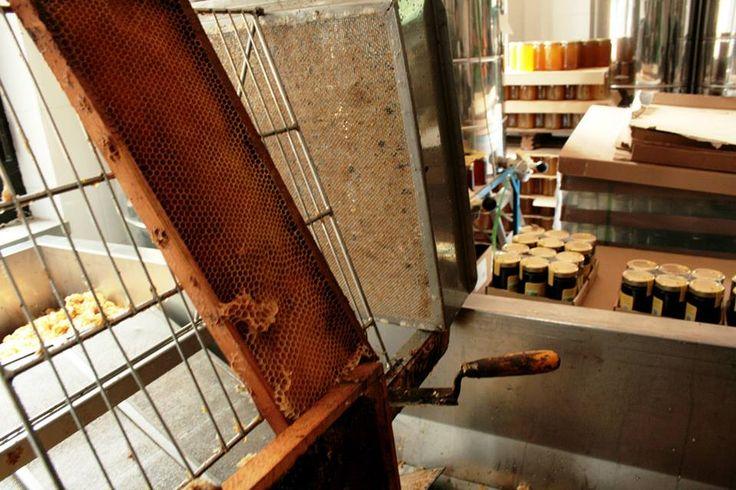 La prodizione di miele nell'Azienda BioBruni by C. Pellerino