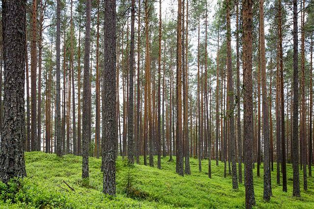 Бесплатные фото на Pixabay - Леса, Стволы, По Вертикали, Стрит
