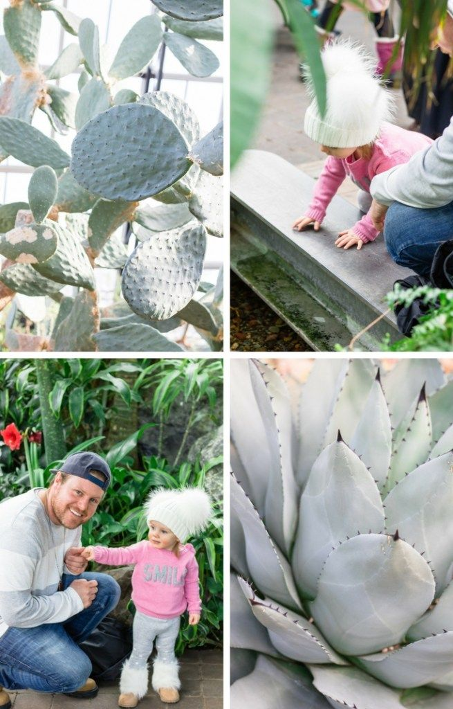 Winter Family Activities in Edmonton - Muttart Conservatory - Indoor Family Activities in Edmonton